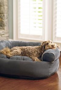 Има ли нужда кучето ти от кучешка къща?